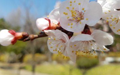 2020.03.23_본원의 봄풍경입니다.